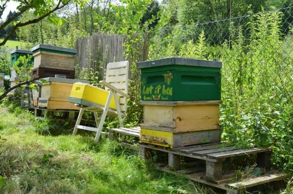 Bienenstöcke in Michaele Kundermanns Garten.
