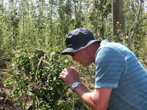 Werner schaut sich bei einem Ausflug in eine Brauerei die Pflanzen im Hopfengarten genau an.